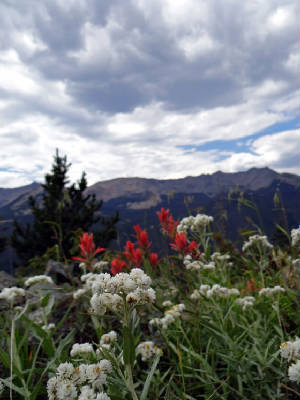 Never summer mtns Indian paintbrush