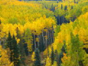 see Fall Colors & Aspens