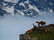 see wildlife ,Elk, Deer,Praire  Dogs, Mountain Goats, Birds, Porcupine, Marmot, Coyote